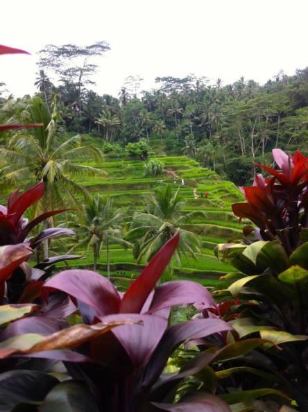 Bali | Chasing Krista | Bali, Indonesia