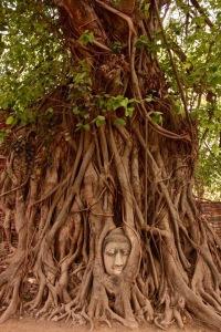 Day Trip to Ayutthaya | Chasing Krista | Ayutthaya, Thailand